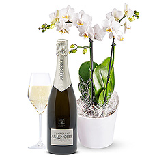 A graceful exotic orchid... and a bottle of exquisite French Champagne Blanc de Blanc (0.7 L). A delightful and stylish gift !