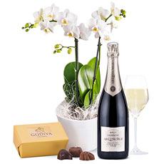 Une magnifique orchidée phalaenopsis blanc pur, éventuellement combinée avec du Champagne et du chocolat. Un cadeau gracieux et exotique !