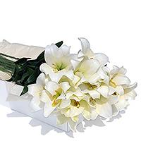 Elégants lys blancs, délicatement parfumés. Une grande botte de lys longiflorum est toujours raffinée et très art déco, désarmante de beauté et déclat. Vous pouvez utiliser ces bottes pour décorer votre maison, votre réception ou salle de fête. Ou simplement comme cadeau, à offrir à des amateurs de décoration florale. Les fleurs sont sélectionnées avec la plus grande rigueur et dans un parfait état de fraîcheur pour que les boutons souvrent lentement chez vous.