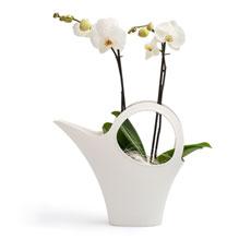 Une magnifique orchidée phalaenopsis blanc pur, dans un arrosoir de la marque branchée Koziol. Un cadeau très original pour une personne extraordinaire!