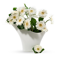 20 trendy white gerbera in a white design vase by Koziol. The vase can also be used as a water-can.