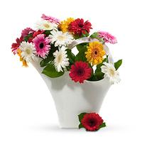 20 gerberas en couleurs variées, dans un arrosoir design Koziol, pour former ce bouquet de charme, simple et raffiné.