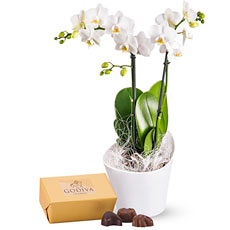 Send this orchid & chocolate gift for a birthday, congratulations, or thank you gift, or for any romantic occasion.
