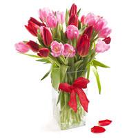 Addicted to Tulips