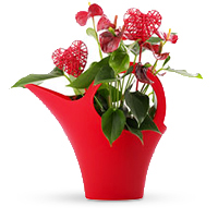 A vibrant red Anthurium and whimsical heart accents are arranged in a Koziol watering can for dramatic effect.