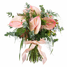 Surprise someone special with this stylish pink Anthurium bouquet which is handtied with a pink ribbon and beautifully presented in a festive gift box.