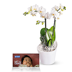 A graceful exotic orchid... this white Phalaenopsis plant in a trendy Koziol container, makes a delightful and stylish gift