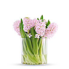 Fresh hyacinths in a clear vase are a simple, elegant gift idea for any special occasion. They are sure to bring a smile to her face.