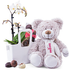 Send well wishes with this charming Think-Pink teddy bear presented with a real orchid and Belgian chocolates.