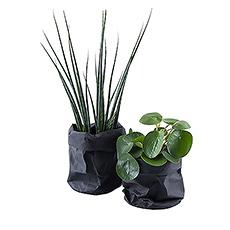 Fan de vert dans la maison mais pas toujours les doigts verts? Ensuite, cet ensemble de plantes succulentes ou de cactus est exactement ce dont vous avez besoin! Facile à entretenir et élégant.