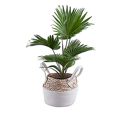 Create a green oasis at home or in the office with this fantastic plant in eco-friendly plant basket.