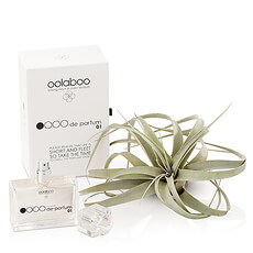 Surprise her with a chic, stylish gift that she is sure to adore. This unique gift for women pairs a stunning air plant with luxurious Oolaboo eau de parfum.