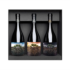 """La collection de vins """"Proyecto Garnacha De España"""" est un hommage à une variété qui a toujours été oubliée et qui est maintenant de retour."""