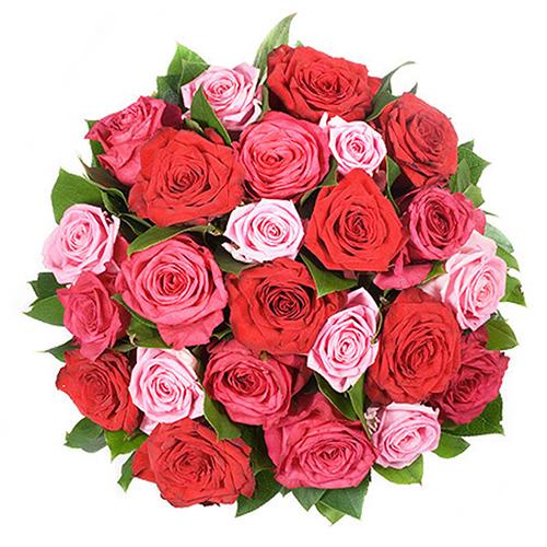 Rose Elégance