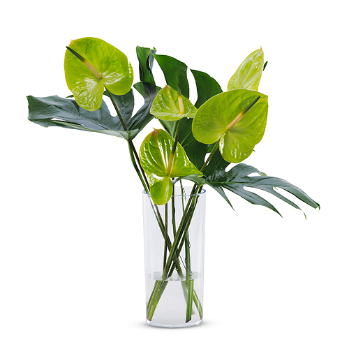 Tropical Green Bouquet in Plexi Vase
