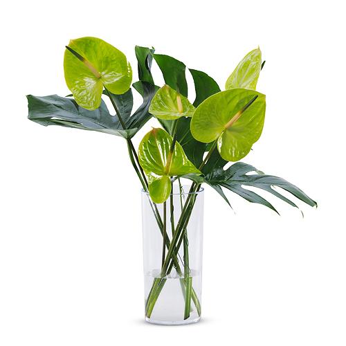 Vase Verte Brise Tropicale