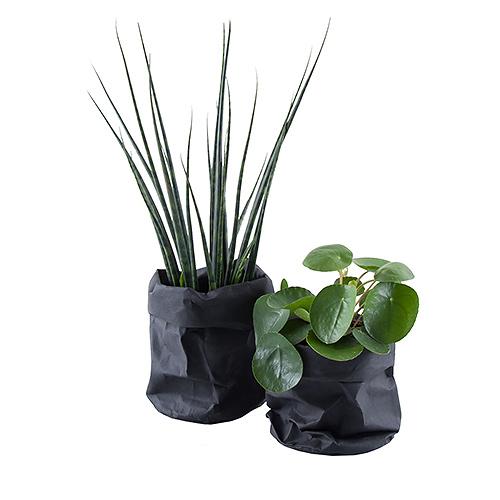 Plant & Cactus in Black Craft Bag