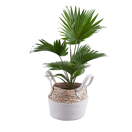 Green Plant In Woven Basket