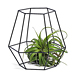 Phyt Air Plant in Black Hexagon Basket [01]