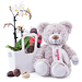 Think Pink Teddy Bear & Orchid in Tachelini [01]