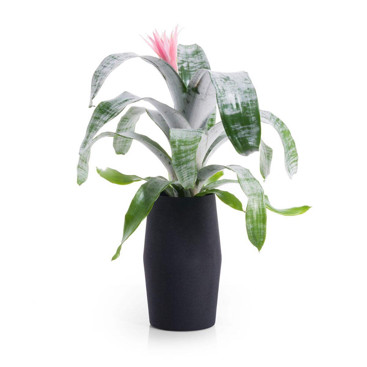 Vase en aluminium avec un bromelia aechmea cadofrance for Fleurs et cadeaux